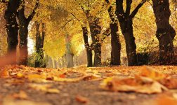 Autumn in the capital – where's the fun