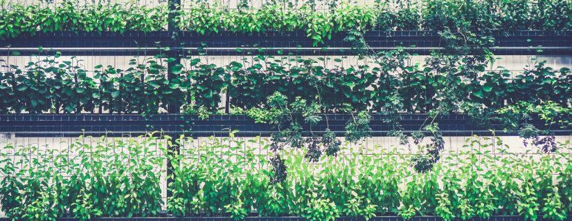 Warsaw greenery